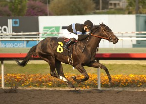Shared Belief is the younger half of the duel at  Del Mar