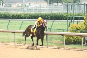 Rachel Alexandra is thought of as one of the best race horses in history  regardless of gender. In 2009, this fabulously fast filly made her mark with a record setting win in the Kentucky Oaks followed by impressive wins against the boys in the Preakness, Haskell, and Woodward. Pictured above, rider Calvin Borel checks the rear view as Rachel scoots toward another win as she did in every start during her 3-year old campaign. Current  super filly Untapable is looking to join Rachel as a Haskell winner when she takes on the boys on July 27 at Monmouth Park.With 4 wins in 4 starts this year and dominant in every one, the Steve Asmussen trained filly will look to join Rachel and Serena's Song (1995) as the only female winners of the Jersey Shore's biggest race. and oh by the way, Rachel's trainer was Steve Asmussen...hmmm!!!