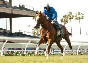 California Chrome took a liking to the Del Mar grass when he worked on November 23